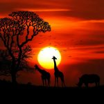 Astonishing things to try out during your safari adventure